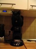 Katzen 2010 001