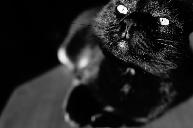 cat-932237_1920